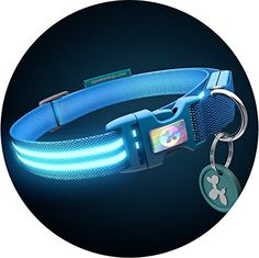 Squeaker LED Light up dog collar Medium 41  53cm 16  20 Electric Blue ** Want additional info? Click on the image.