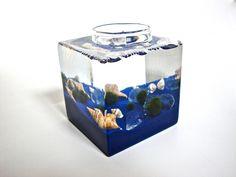 Aqua Terrarium / Five Marimo Moss Ball Friends in Their Glass Block Home Terrarium. $25.50, via Etsy.