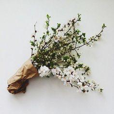 Blossom and brown paper