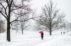 Pulitzer Prize-winning alum pens book about adventures in love and work Pink Umbrella, Winter Road, School Photos, Graduate School, Photo Contest, Dusk, Winter Wonderland, Snow, Adventure