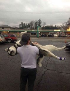 - Funny Dog Quotes - When your husky hurt his foot The post Funny Pictures Today! appeared first on Gag Dad. Dog Quotes Funny, Dog Memes, Funny Dogs, Cute Dogs, Funny Memes, Love My Dog, Puppy Love, Husky Humor, Dog Humor