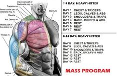 Muscle Mass And Strength Increase- 10 Simple Tips For Great Results - GymGuider.com