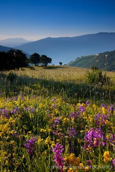 Wildflowers Umbria Sibillini Italy Photography Workshop Tour, province of Perugia
