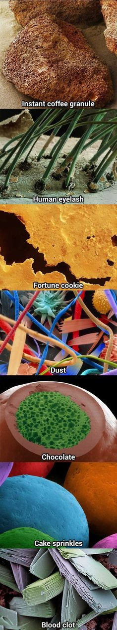Everyday things made awesome under a microscope…