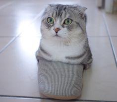 Las mas hermosas Gatos en los lugares más extraños