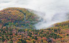 Landscape 4K Ultra HD Wallpaper    ... Forest Landscape Fog Ultrahd 4k Free >> HD Wallpaper, get it now