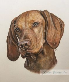 Hungarian Vizsla Portrait Fine Art Print by by GillianUssherArt @gillianussher @craftbuzz