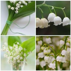 Lily of the valley....my flower (May Baby)
