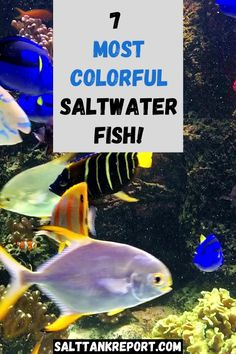 Want to add some color to your saltwater tank? Check out these 7 amazing saltwater fish that are full of color! Make your saltwater fish tank pop! Saltwater Fish Tanks, Saltwater Aquarium, Fishing For Beginners, Reef Aquarium, Salt And Water, Pop, Amazing, Check, Animals