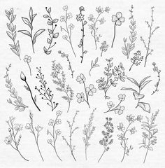 Black Hand Drawn Herbs, Plants and Flowers, Branches, Florals. Vector… Black Drawn Herbs, Plants and Flowers. Vector Illustration royalty-free black drawn herbs plants and flowers vector illustration stock vector art & more images of flower Small Flower Drawings, Flower Sketches, Small Flowers, Plant Sketches, Diy Flowers, Easy To Draw Flowers, Botanical Line Drawing, Floral Drawing, Drawing Flowers