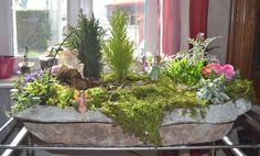 Photo de Helly Barbaud . 1er jardin de fées , Mars 2016 .