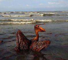 16-imagenes-ensordecedoras-que-reflejan-las-consecuencias-de-la-contaminacion-del-medioambiente