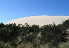 Sand dunes --Honeyman Park, Oregon - on Lake Cleowox -  close to the coast.  I went down this huge dune hundreds of tims as a kid