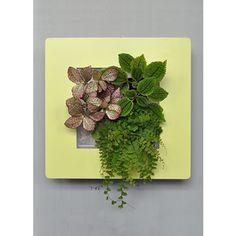 Tableau végétal Arden Flore carré anis végétalisé Deco Design, Decoration, Miniature, Garden, Flowers, Courtyard Gardens, Art Paintings, Decor, Garten