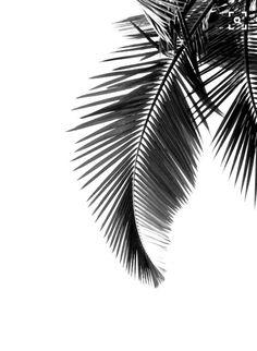 #palmtree #summer #black #white #holiday #ready #sun