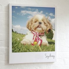 personalised pet polaroid canvas by the drifting bear co. | notonthehighstreet.com