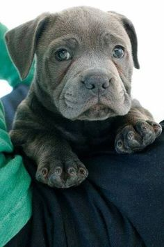 Just look at this sweetest little face! <3 #cute #puppy