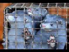 Last Japanese mink fur farm closes down