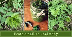 Pesto z bršlice Korn, Kimchi, Pesto, Zucchini, Cabbage, Herbs, Vegetables, Plants, Diet