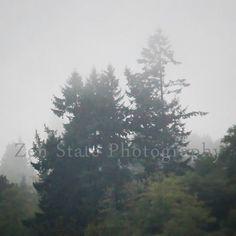 Rain Forest Nature Print Wall Art. Foggy Morning Rainforest Photo Nature Photograph. Unframed Photo Print Framed Photography Canvas Print. by ZenStatePhotography from ZenStatePhotography. Find it now at http://ift.tt/1zY7Jgy!