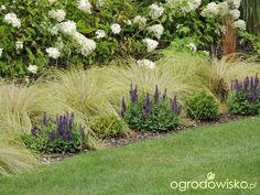 Zielonej ogrodniczki marzenie o zielonym ogrodzie - strona 825 - Forum ogrodnicze - Ogrodowisko