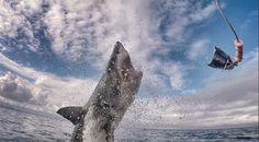 """Dan Abbott, estudioso da diversidade biológica do programa """"White Shark Africa"""", flagrou o ataque de um tubarão-branco em Mossel Bay, na África do Sul. As fotos mostram o animal saltando para capturar uma isca. A sequência de imagens foi compartilhada pelo conservacionista em seu"""