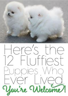 You're welcome! You'll love these 12 pics! http://theilovedogssite.com/heres-the-12-fluffiest-puppies-who-ever-lived-youre-welcome/