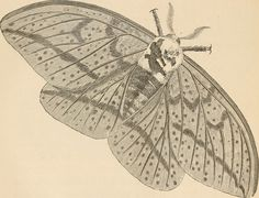 """Image from page 165 of """"The butterfly hunters"""" (1868) 