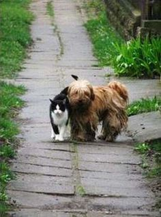 The 50 Cutest Things That Ever Happened     Kiitty waited to walk with her pal, the dog