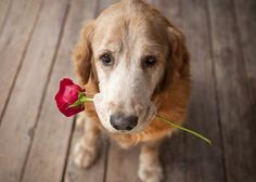 """Arditor - 8 Ways Your Dog is Saying """"I Love You"""""""