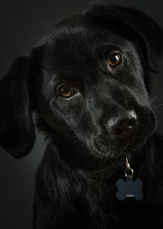 Black Dog by Matt Barnett via 500px.