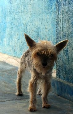 #Venus #yorkshire #dogs #turboshouse #zaquelinesouras #zsouras