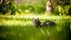 cat_resting_in_the_grass