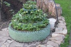 Use your old winter tires and pots as strawberry tower.