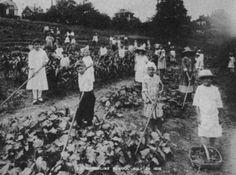 Brookline (PA) Elementary School Garden, c. 1916