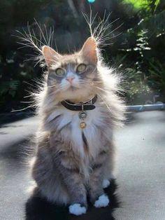 #cat# #Animals# #cut#