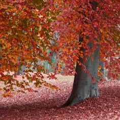 Beauty of Fall, when the world is painted in Red!