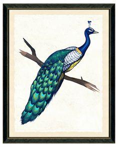 One Kings Lane - Inspired Combinations - Rustic Wood Framed Peacock Print II