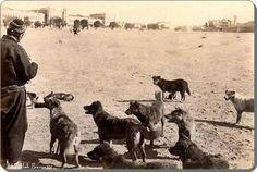 Taksim, bir adam ve köpekler... 1880 #istanlook