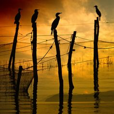Evening colours > birds are cormorants, common in marina areas of the world.  www.loisjoyhofmann.com