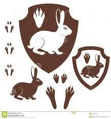rabbit paw print - Google Търсене