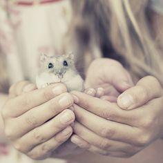 Hamster <3