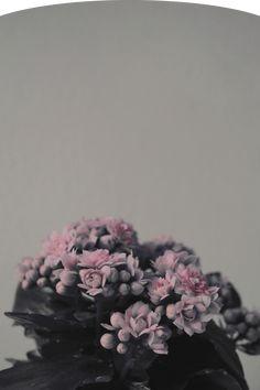 fine-art photography by Juho Rahikka Fine Art Photography, Flowers, Art Photography, Royal Icing Flowers, Floral, Florals, Flower, Bloemen, Artistic Photography