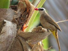 Parrot, Bird, Yellow, Animals, Parrot Bird, Animales, Animaux, Birds, Animal