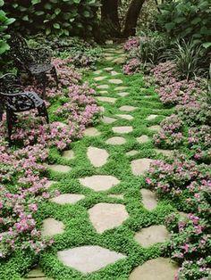 Dwarf Impatiens Beautiful ground cover
