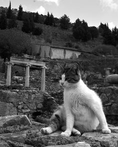 Roman Cat would like his temple rebuilt and his minions to start worshiping him promptly.