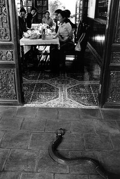 A snake is presented to a group of customers at a restaurant who have selected it for their lunch. Its heart, blood and bile will be removed and consumed, in the belief that it will increase sexual libido || Hanoi, Vietnam by Patrick Brown