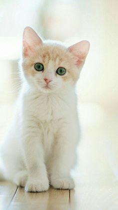 gem eyes cat