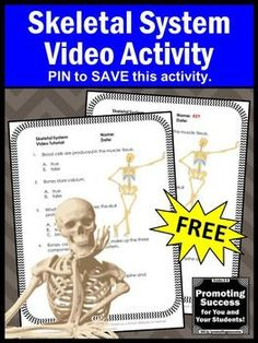 This FREE printable skeletal system science worksheet and video will supplement your human body systems unit for kids in 4th, 5th, 6th and 7th grade. These biology activities also work well for teaching middle school and special education students. You may also purchase a foldable interactive notebook project for kids.
