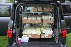 Here's what I've got for you this week… A unique bouquet transport idea from Love, Lily … A couple of gorgeous flowers… . Flower Shop Design, Floral Design, Cherry Blooms, Paisley, Flower Studio, Flower Farm, Diy Flower, Peach Blossoms, Motif Floral